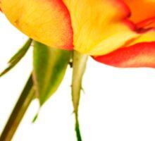 Autumn Splendor Rose Sticker