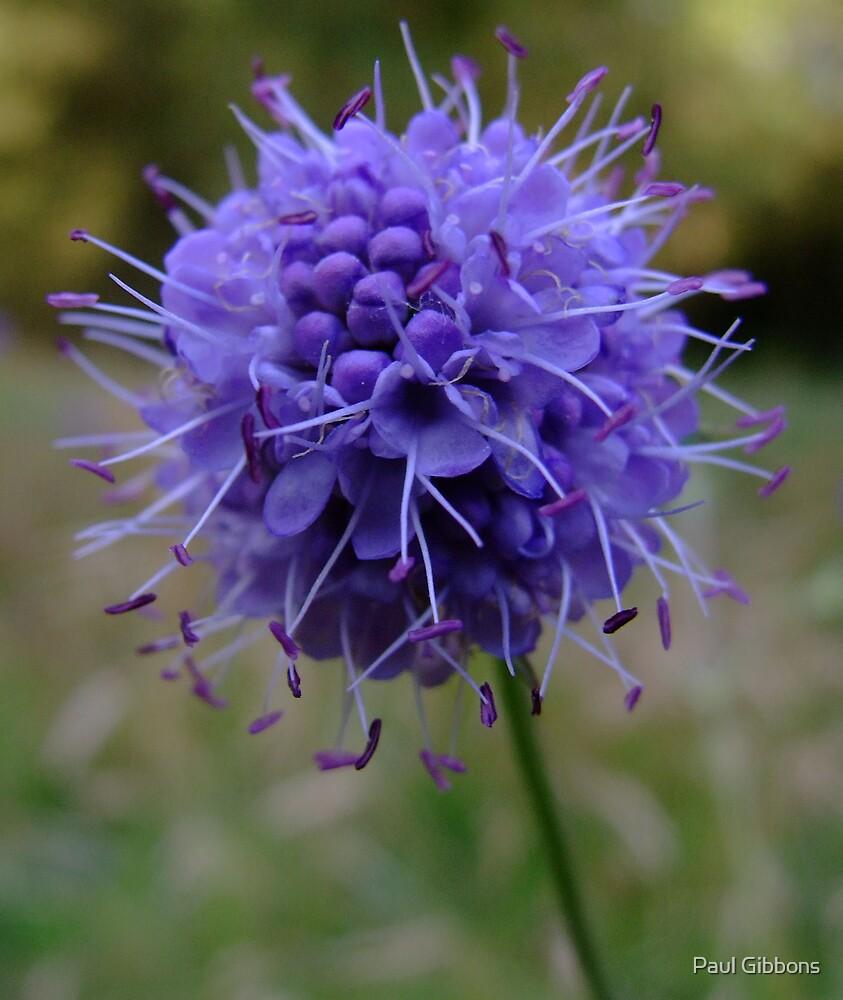 Perfect Purple  by spottydog06