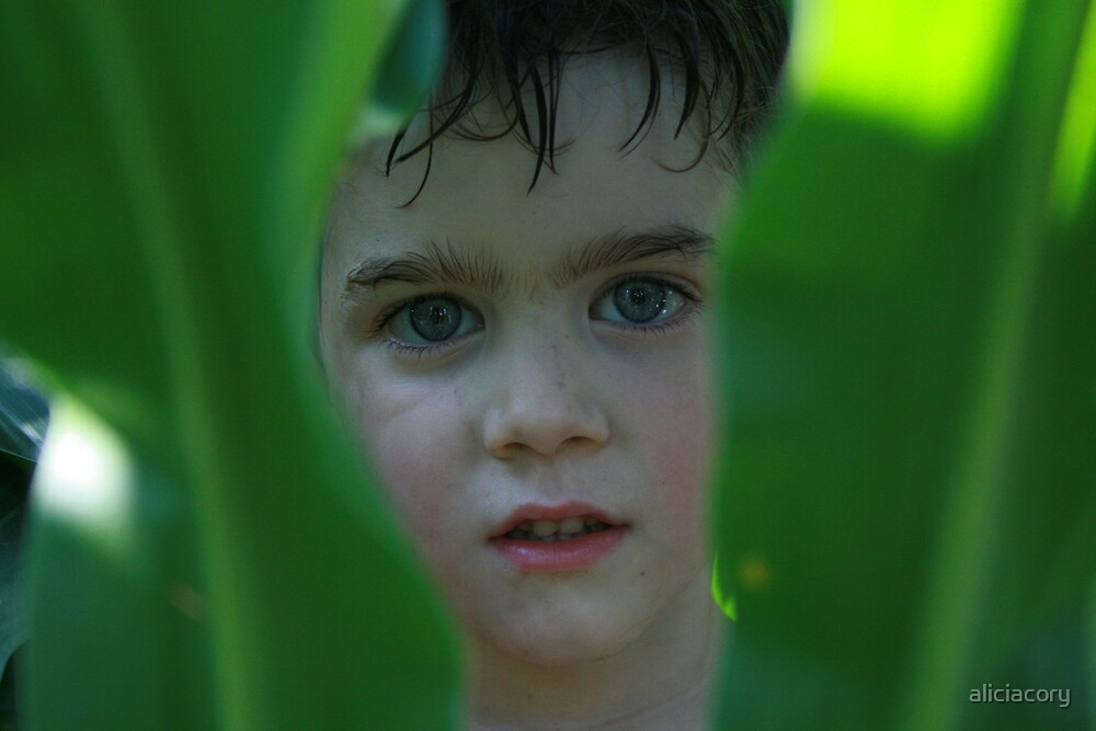 Boy in Corn by aliciacory
