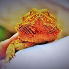 Bearded dragon by ♥⊱ B. Randi Bailey