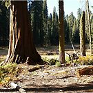 Sequoia National Park by quickgroth