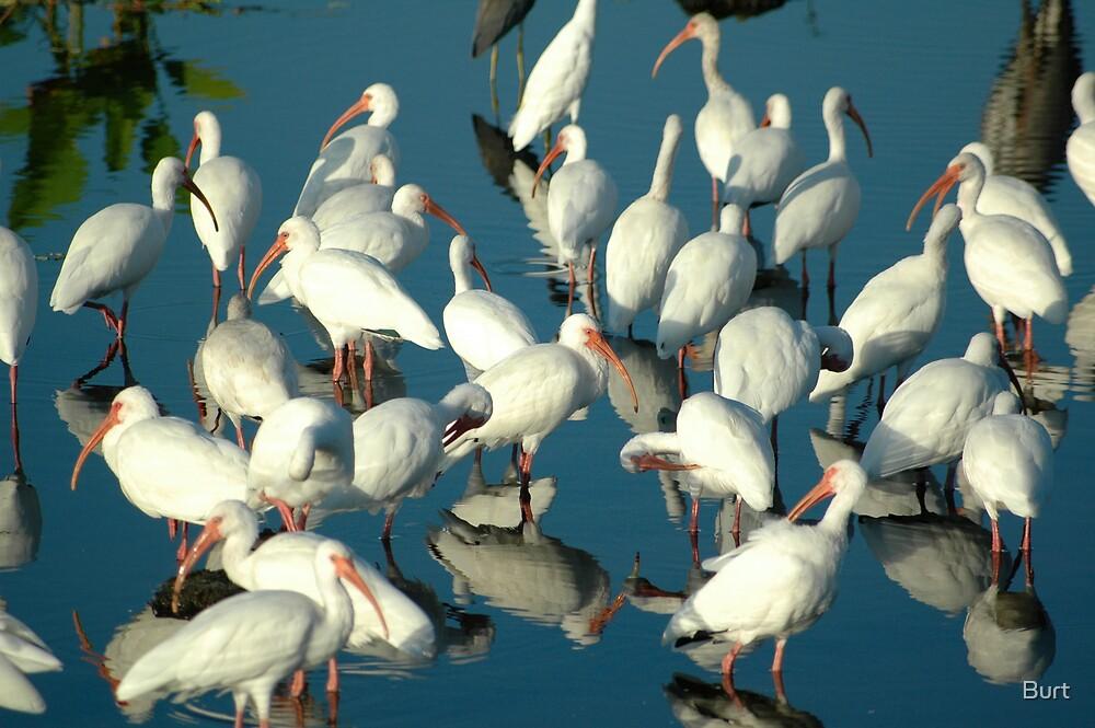 The Flock Unites by Burt