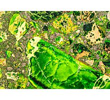 Green Sea Sediment Agate Pattern Photographic Print
