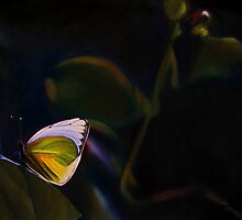 Beauty Out of Darkness by Leslie Gustafson