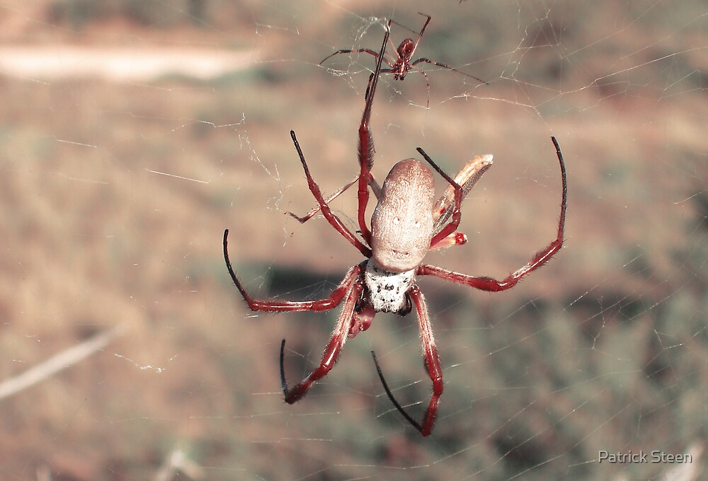 Glass Spider by Patrick Steen