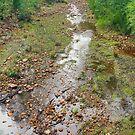 Stoney Creek II by Harry Oldmeadow