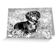 Macy Black and White Greeting Card