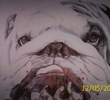 bulldog by diamondscorpio12