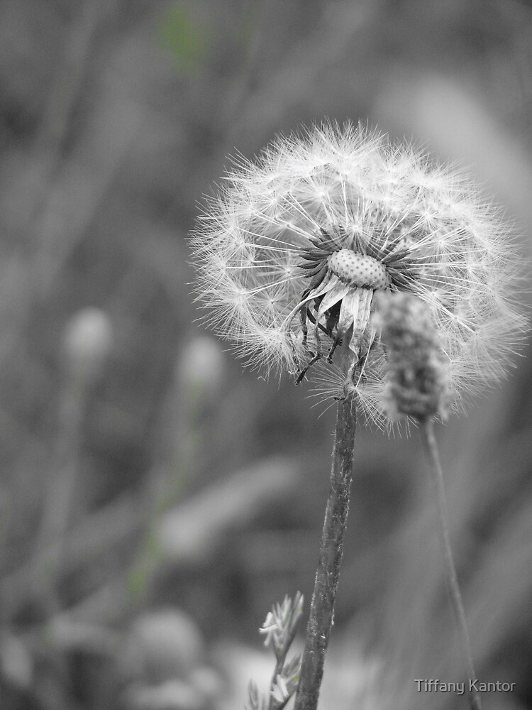 Make  A Wish by Tiffany Kantor