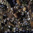 Shells ~ Riverbank by Barbara Wyeth