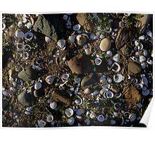 Shells ~ Riverbank Poster