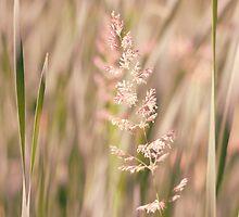 Tall Grass by Marc Craig