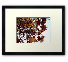 Sycamore Leaves Against the Sky Framed Print