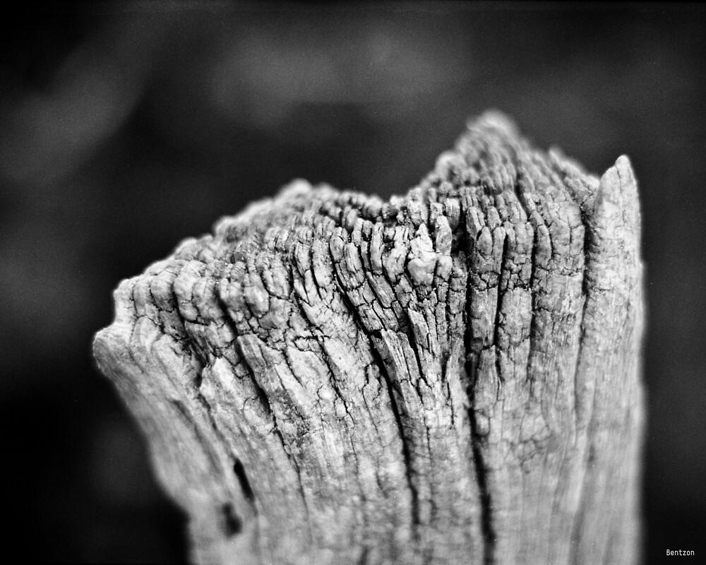 Scars of Time by Morten Bentzon