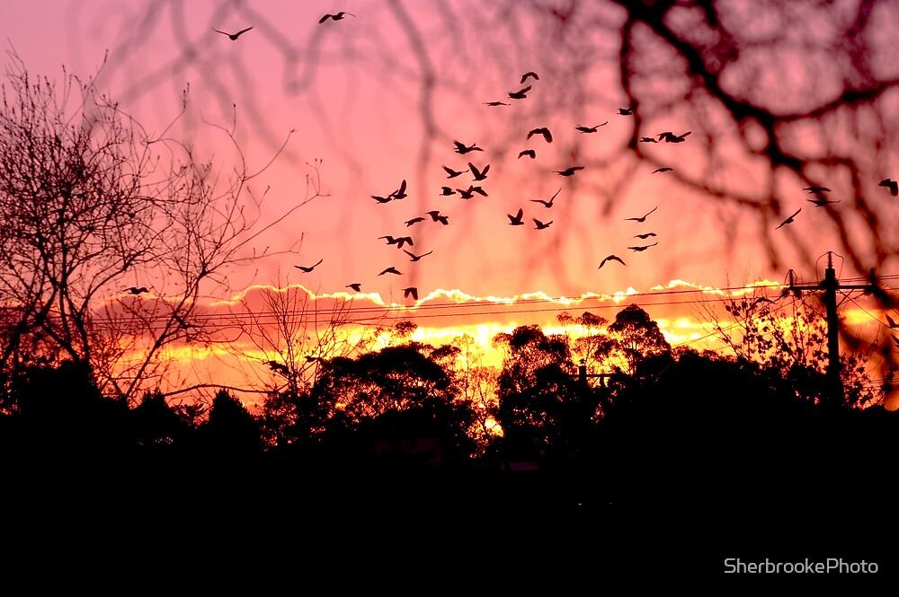 Evening Flight by SherbrookePhoto