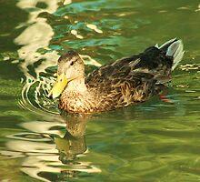 Mr Duck by royce
