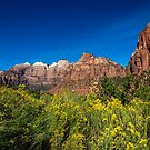 Zion Flowers by barkeypf