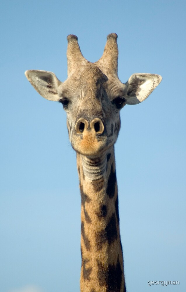 Giraffe by georgyman