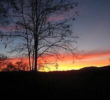 Beautiful Evening by stacyrsullivan
