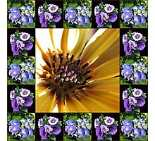 Cape Daisy, Lisianthus and Hydrangea Collage Photographic Print