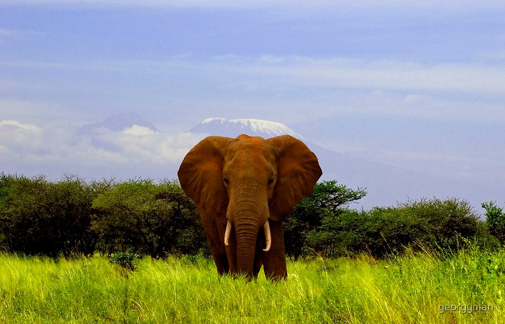 Elephant and Kilimanjaro by georgyman