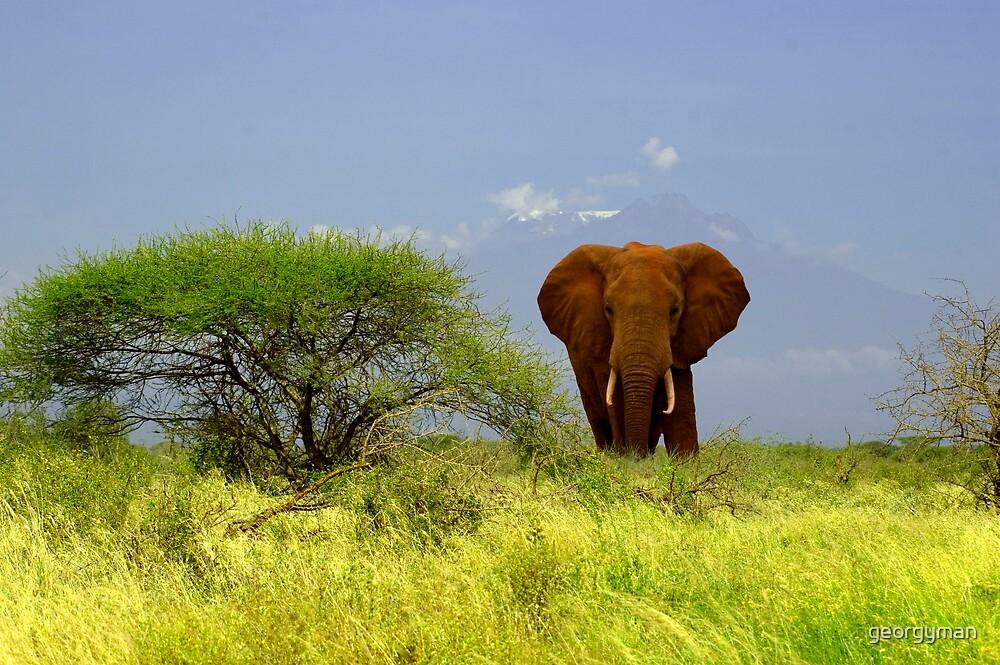Elephant and Kilimanjaro 2 by georgyman