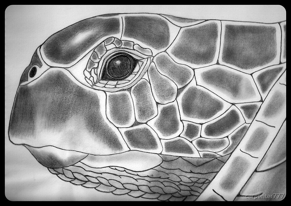 Turtle by carpenter777