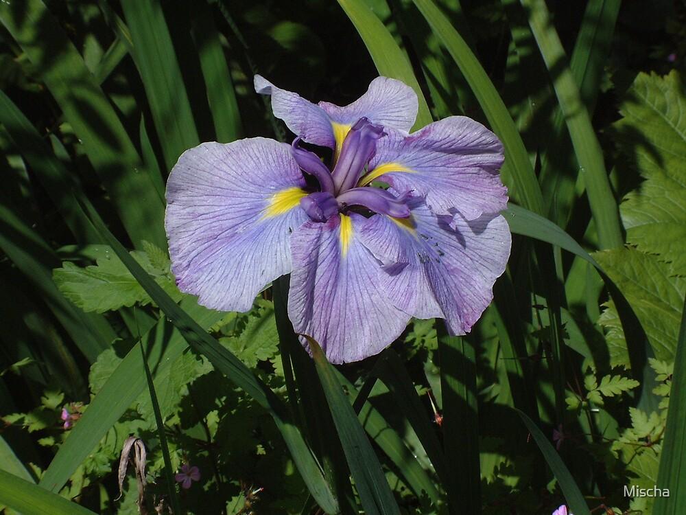 Purple Flower by Mischa