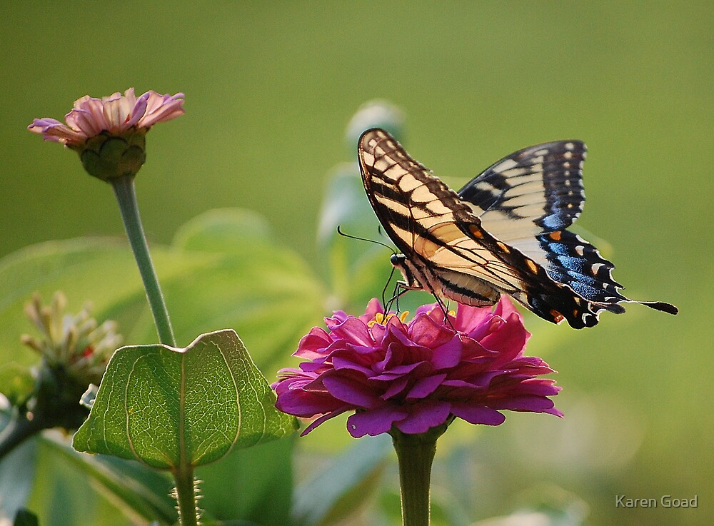 Life of a Butterfly by Karen Goad