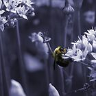 Bumble Bee by Craig Cooper