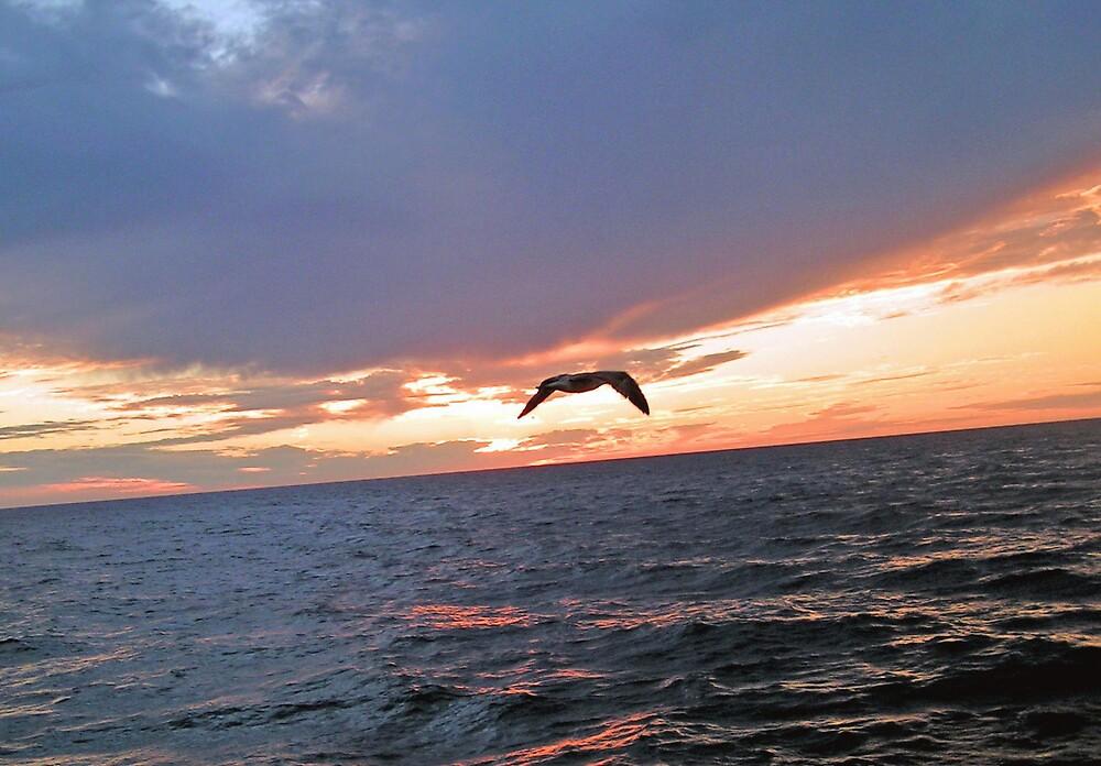 Flying through the Sunset by kraftyest