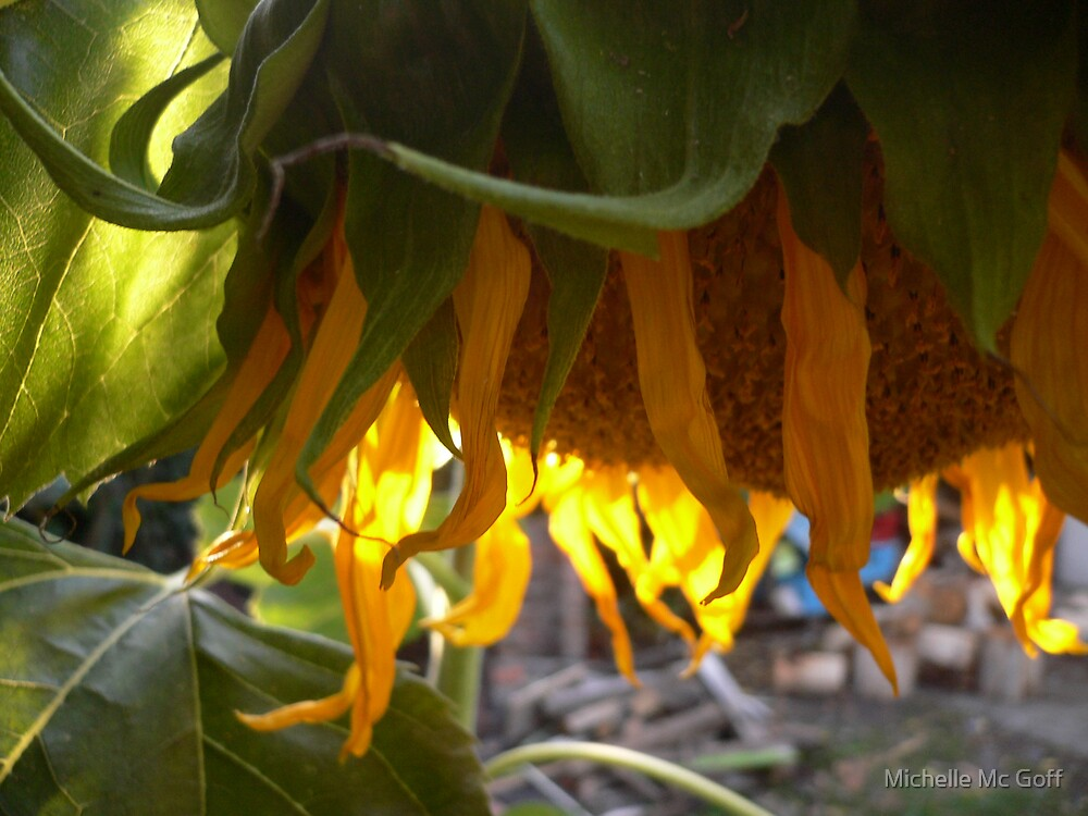 Hanging Sunflower by Michelle Mc Goff