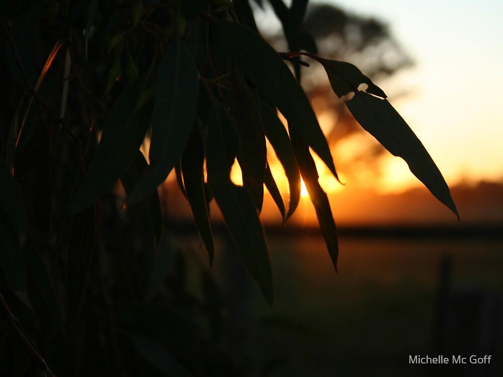 Sunset through the Gum by Michelle Mc Goff
