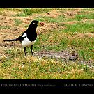 Yellow-Billed Magpie - Cool Stuff by Maria A. Barnowl