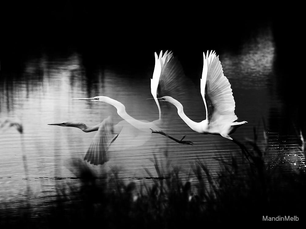 Flight by MandinMelb
