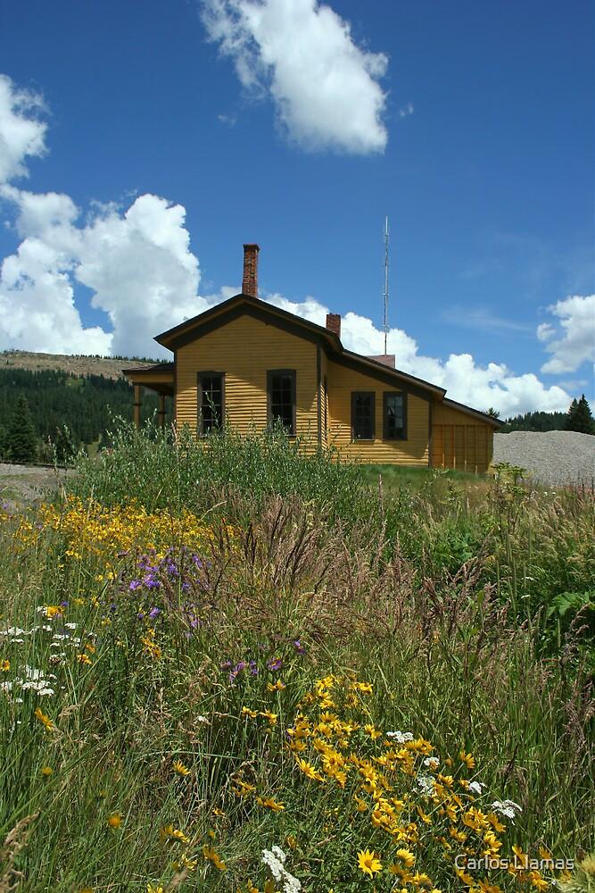 Cumbres Station Wild Flowers. by Carlos Llamas