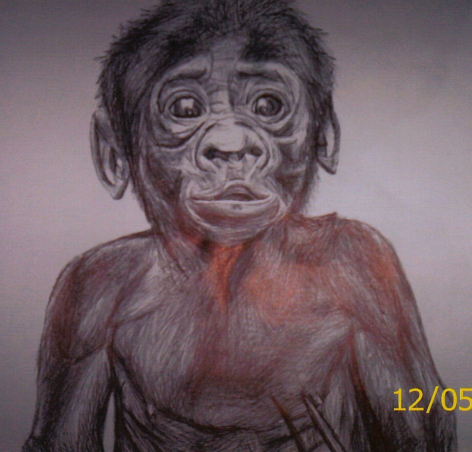monkey by diamondscorpio12