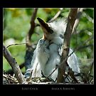 Egret Chick - Cool Stuff by Maria A. Barnowl