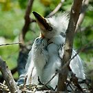 Egret Chick by Maria A. Barnowl
