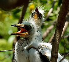 Egret Chicks by Maria A. Barnowl
