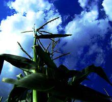 Mighty Corn by J Avary Vox