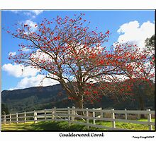 Caulderwood Coral by Tracy King