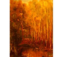 King Parrot Creek, Flowerdale, Vic Australia Photographic Print
