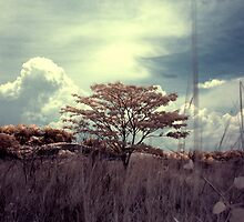 Infrared at Cyberjaya 6 by zoule