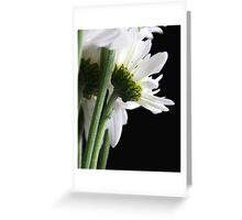 White Daisy Flowers Greeting Card
