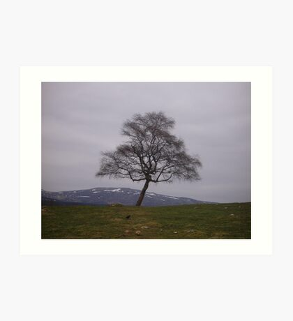 Tranquil Tree Art Print