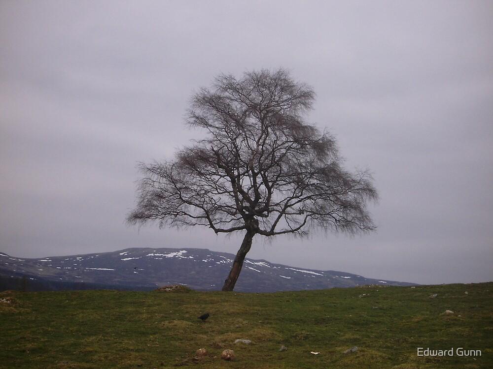 Tranquil Tree by Edward Gunn