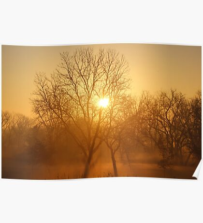 Sun Rays Poster