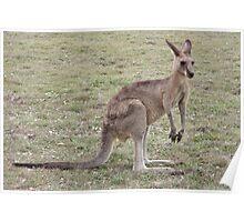 Silent Kangaroo Poster