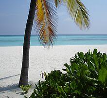 Paradise by simonj